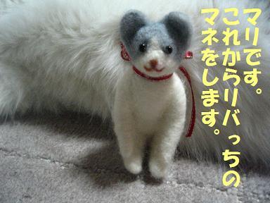 2007_01120004.jpg