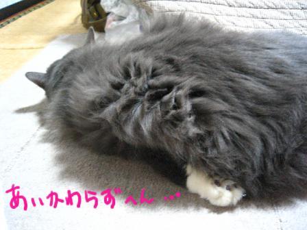 2007_12140029.jpg