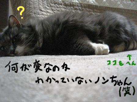 2007_12140031.jpg