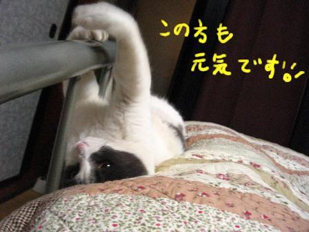 2007_12140039.jpg