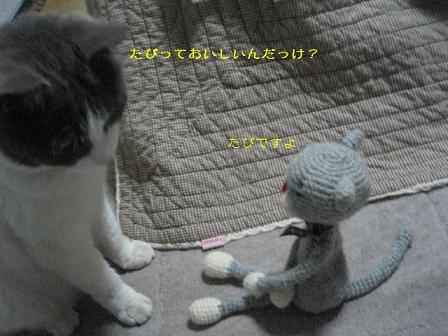 2008猫ツアー 001