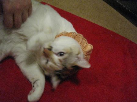 2008猫ツアー 024