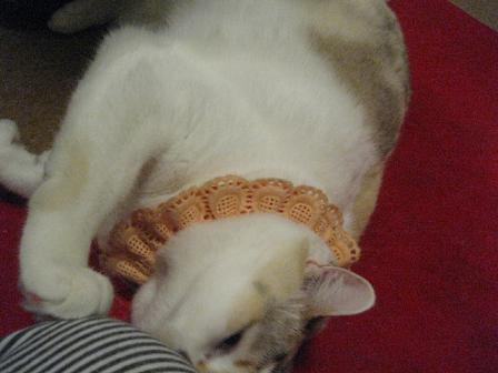 2008猫ツアー 025