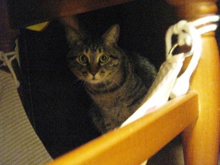 2008猫ツアー 037