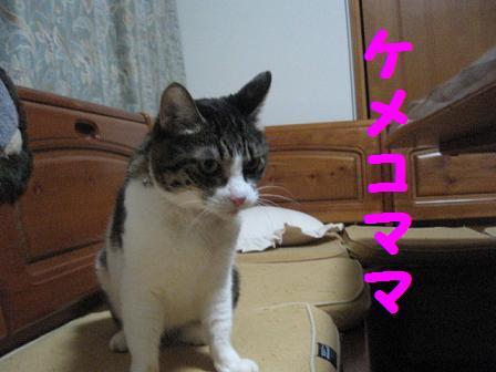2008猫ツアー 251