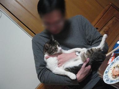2008猫ツアー 268
