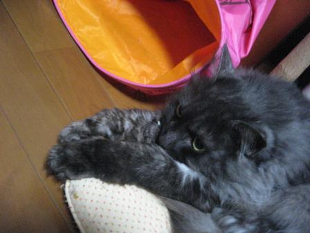 2008猫ツアー 298