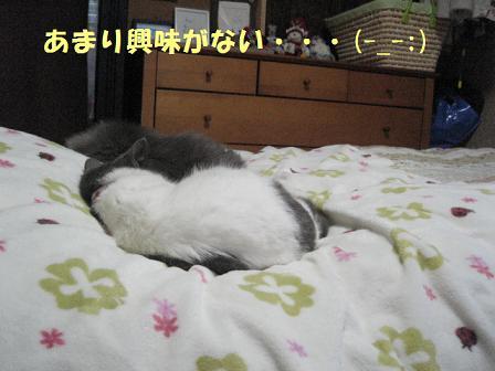 2008_03150020.jpg
