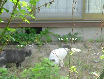 2008_06080029.jpg