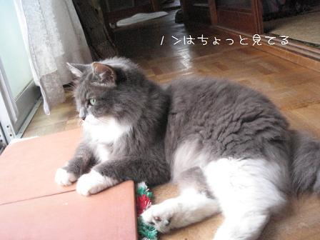 2008_07120038.jpg