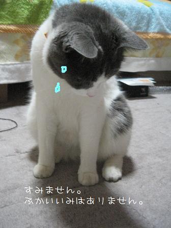 2008_07150005.jpg