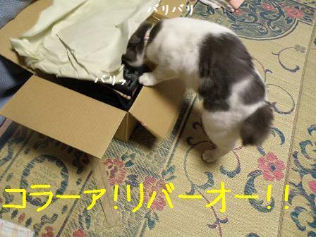 2008_08110003.jpg