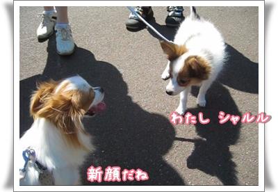 MVI_4604_0001.jpg