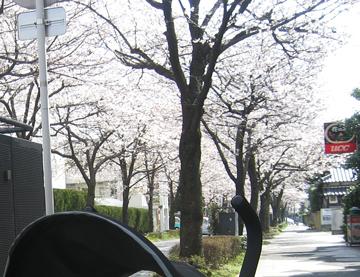 20080404_04.jpg