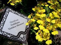 黄色い花のアップ