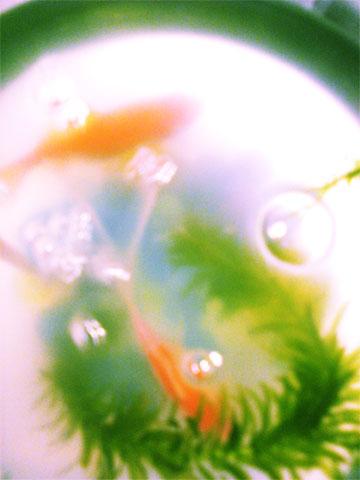 SBSH0150.jpg