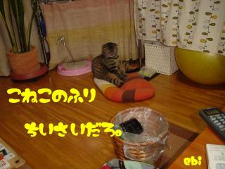 子猫のふり