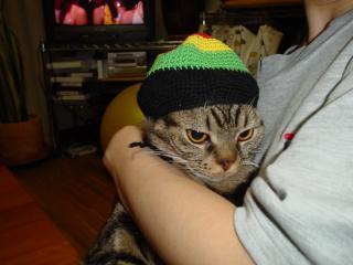 レゲエ猫2