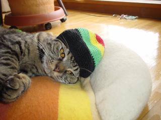 レゲエ猫3