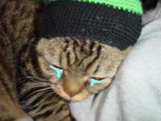 レゲエ猫泣く