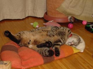 おしっこ我慢して不貞寝。