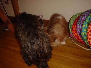 濡れ濡れ猫サンたち。
