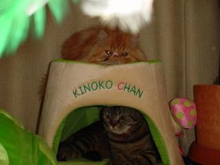 上下に猫サン♪