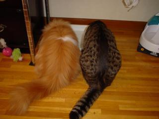 2猫さま後姿