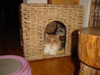 猫ハウスにて。