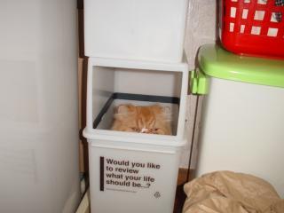 箱はやめられないにゃのにゃ