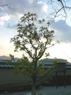 0105yukei01.jpg