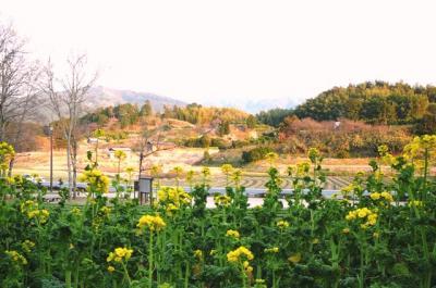 0226asukanabana01.jpg