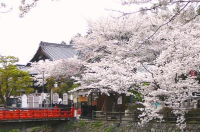 0408abesakura05.jpg