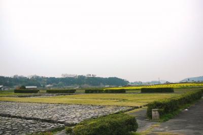 0408asukananohana02.jpg