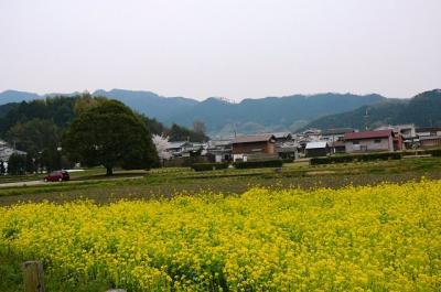 0408asukananohana04.jpg