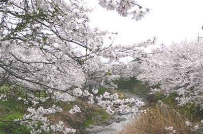 asukagawa02.jpg