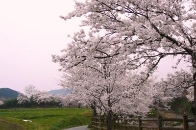 asukagawa03.jpg