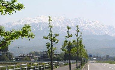 tateyama-0503.jpg