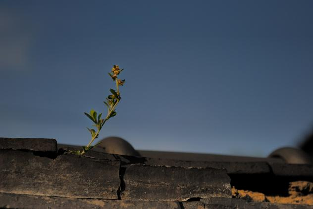 谷中-屋根