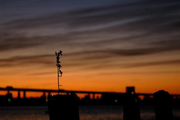 平井大橋の夜明け