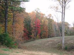 裏庭の秋模様