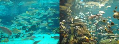SC水族館