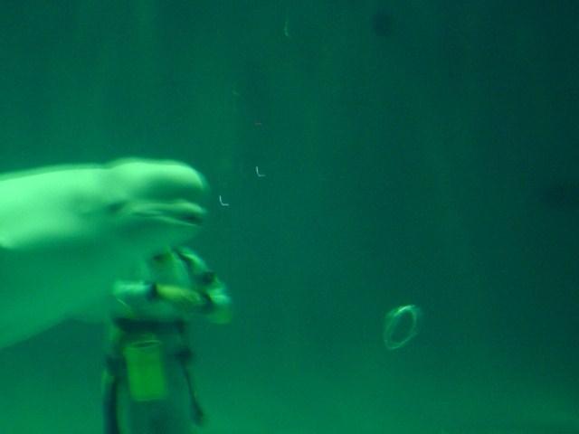 白イルカ 5