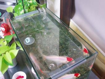 コメ水槽の蓋