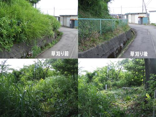 裏山草刈り