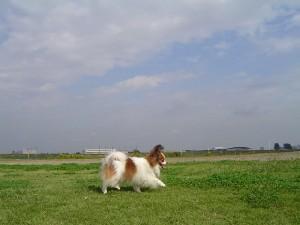 楽しい散歩♪