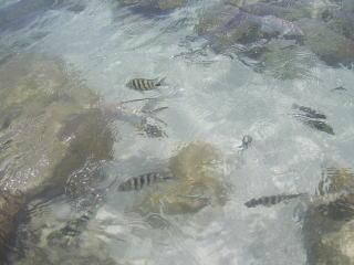 水面から見た魚