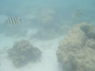 珊瑚や岩場