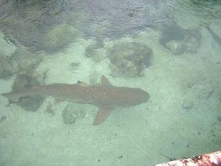 水族館のサメ