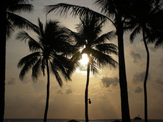 夕日とヤシがきれい